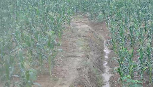 土地玉米地