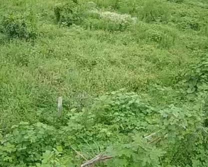 田地风景中