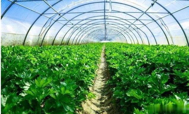 一颗认养与绿色蔬菜的故事