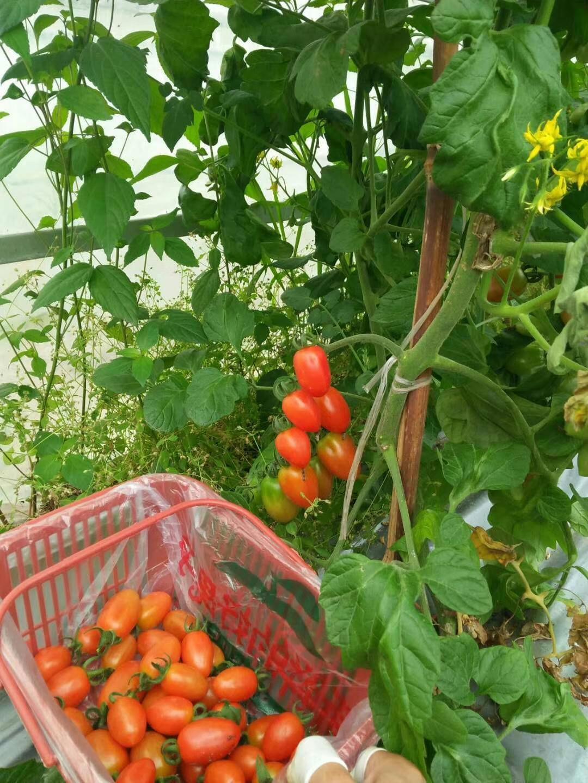 草莓哥哥生态农业园401