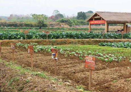 华琴果业--土地认养