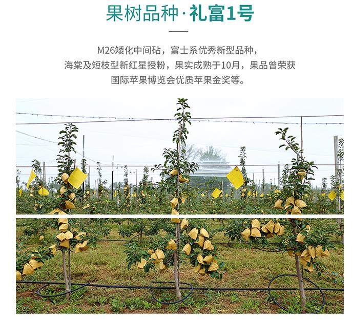 延长苹果认养示范园苹果认养