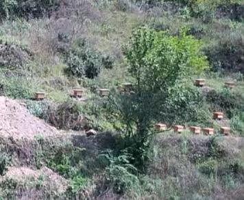 中蜂养殖基地