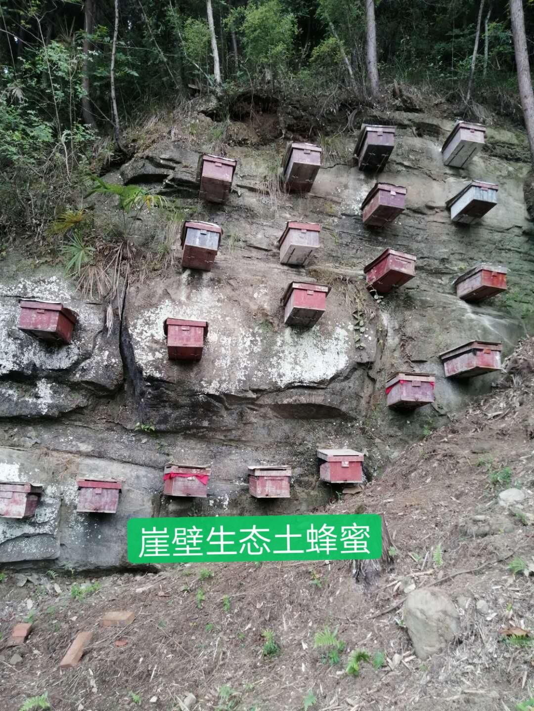 崖壁生态土蜂蜜认养