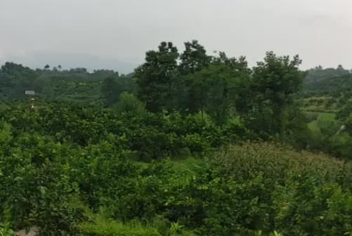 果树 用于农场