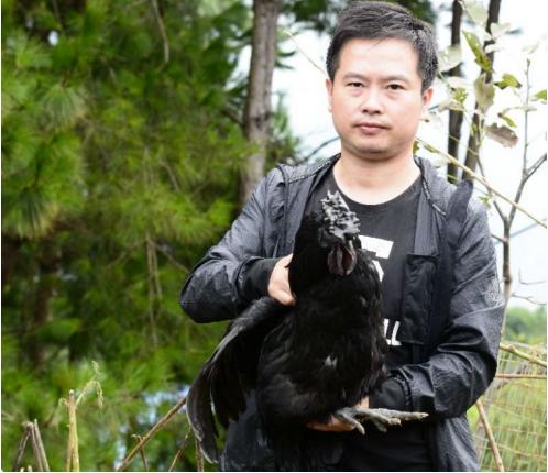 百里坡旧院黑鸡全国首播