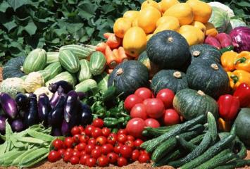 明全家庭农场蔬菜认养
