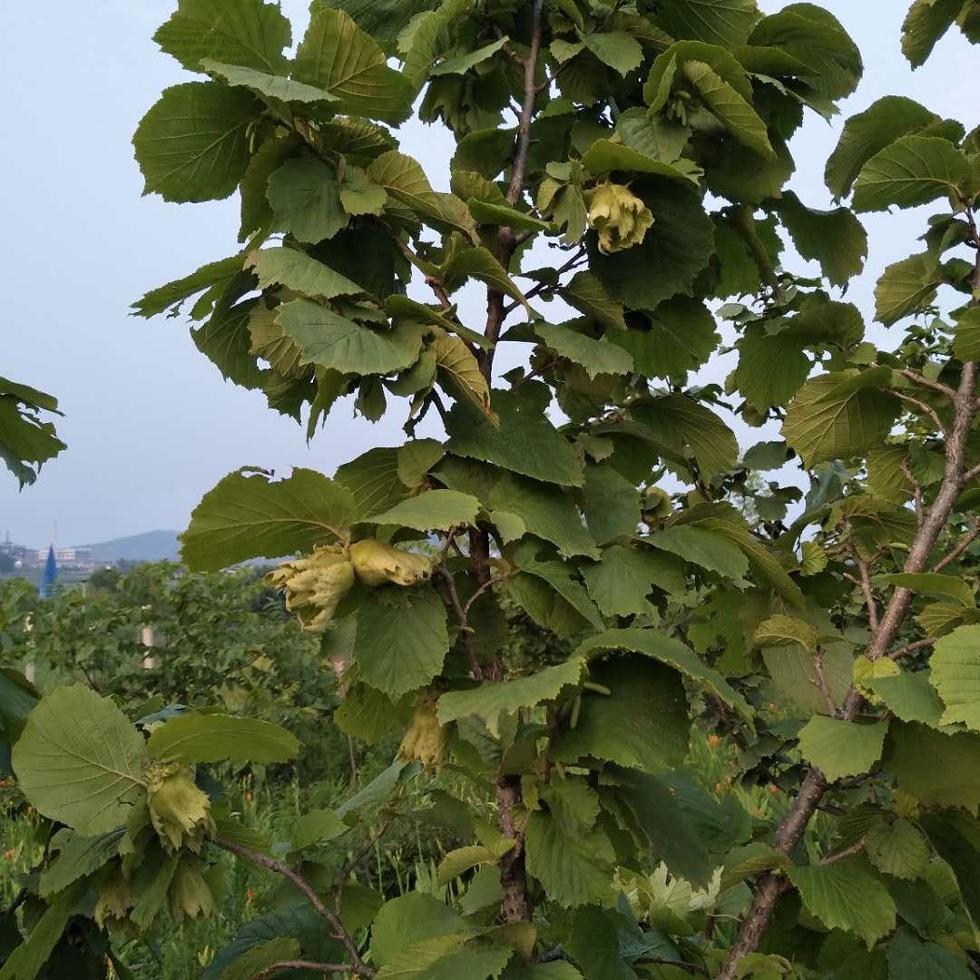 五阳元坤家庭农场果树认养