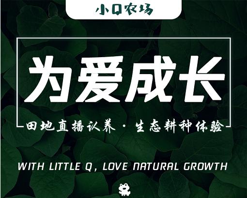 乳泉山庄上线小Q菜园直播认养350元/季度