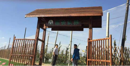 一颗认养与陕西延长县政府达成直播+认养农业合作