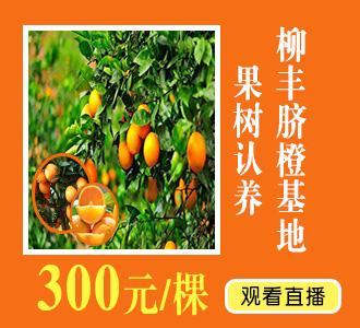 柳丰脐橙基地果树认养(番教1)