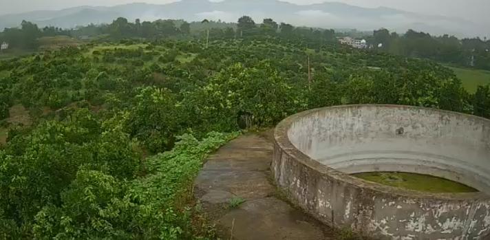 邻水脐橙果树认养(观景台)