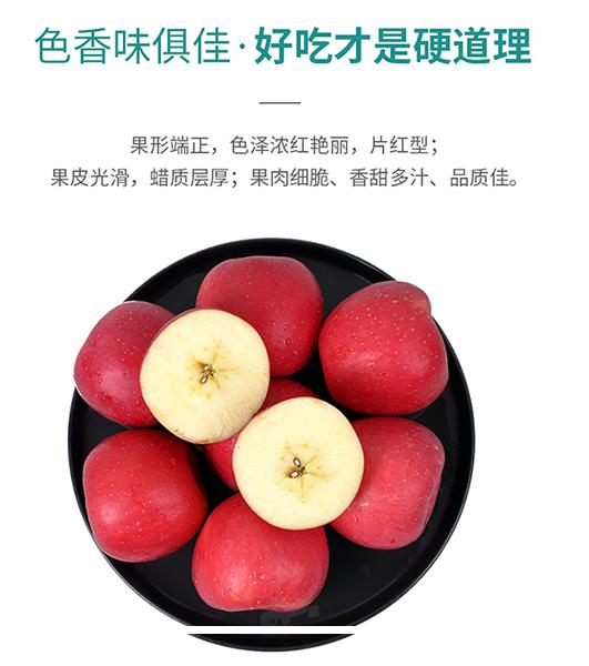 延长苹果认养示范基地07区